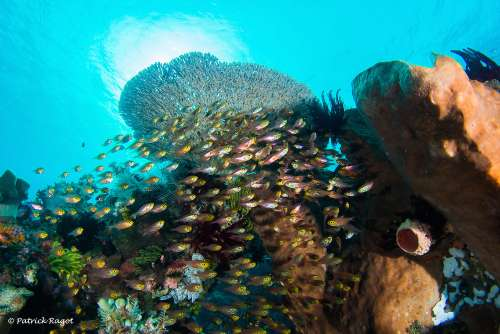 Diving Sulawesi - Sulawesi Liveaboard - Plonger a Sulawesi